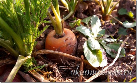 Нажмите на картинку, чтобы вернуться в начало статьи о Пользе Морковки *Оранжевое лакомство...